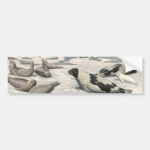 Vintage Marine Life Mammals Harp Seals Snow Arctic Bumper Stickers