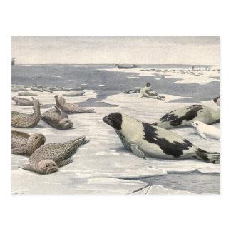 Vintage Marine Life Mammals Harp Seals Snow Arctic Postcard