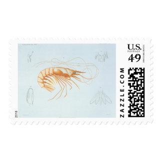 Vintage Marine Life Ocean Animal; Shrimp Anatomy Postage Stamps