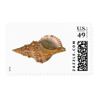 Vintage Marine Life Ocean Animal, Triton Seashell Stamps