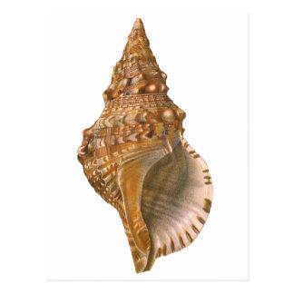 Vintage Marine Life Ocean Animal, Triton Seashell Postcard