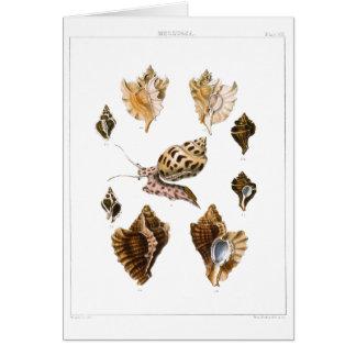 Vintage Marine Life Organisms, Snails and Mollusks Card