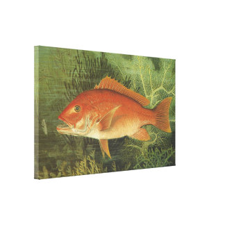 Vintage Marine Life, Red Snapper Fish in the Ocean Canvas Print