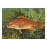 Vintage Marine Life, Red Snapper Fish in the Ocean Cards