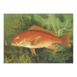 "Vintage Marine Life, Red Snapper Fish in the Ocean 5"" X 7"" Invitation Card"