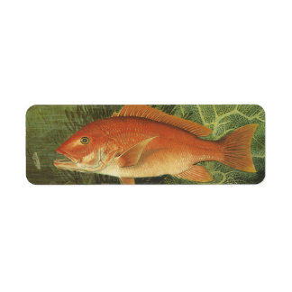 Vintage Marine Life, Red Snapper Fish in the Ocean Label