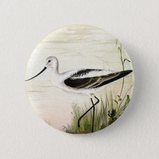 Vintage Marine Life Shorebirds, Avocet Birds Pinback Button