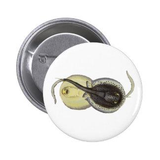Vintage Marine Ocean Animals, Spotted Stingrays Button