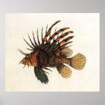 Vintage Marine Ocean Life Animal, Lionfish, Fish Posters