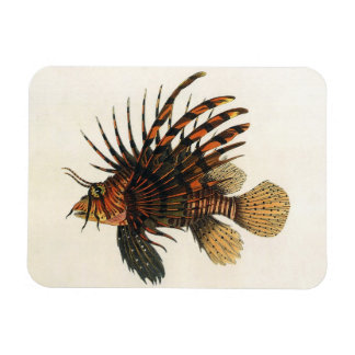 Vintage Marine Ocean Life Animal, Lionfish, Fish Rectangle Magnets