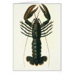 Vintage Marine Ocean Life Crustacean, Lobster Cards