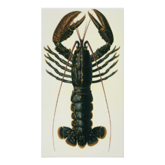 Vintage Marine Ocean Life Crustacean, Lobster Posters