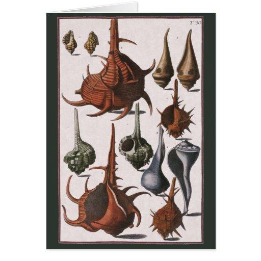 Vintage Marine Ocean Life, Seashells Sea Shells Cards