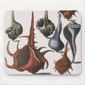 Vintage Marine Ocean Life, Seashells Sea Shells Mouse Pad