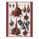 Vintage Marine Ocean Life, Seashells Sea Shells Post Cards