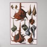 Vintage Marine Ocean Life, Seashells Sea Shells Posters