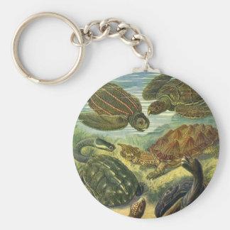 Vintage Marine Reptiles, Sea Turtles Land Tortoise Basic Round Button Keychain
