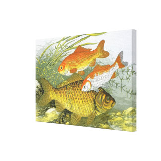 Vintage Marine Sea Life, Aquatic Fish Goldfish Koi Canvas Prints