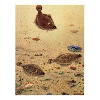 Vintage Marine Sea Life, Trio Flat Fish Flounders Post Card