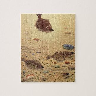 Vintage Marine Sea Life, Trio Flat Fish Flounders Puzzles