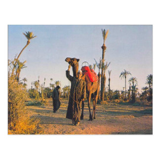 Vintage Marrakesh, camellos Tarjetas Postales
