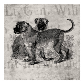 Vintage Mastiff Dog 1800s Mastiffs Dogs Templates Poster