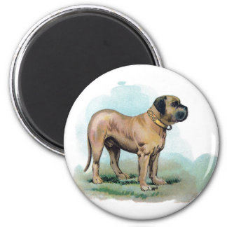 Vintage Mastiff Illustration Magnet