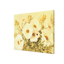 Vintage Matilija Poppies - Stretched Canvas Print