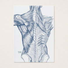 Vintage Medical Drawing Back Muscles Blue (1890) Business Card at Zazzle