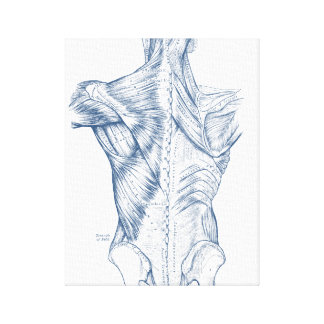 Vintage Medical Drawing Back Muscles Blue (1890) Canvas Print