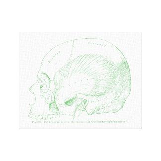 Vintage Medical Drawing Human Temporal Muscle Canvas Print