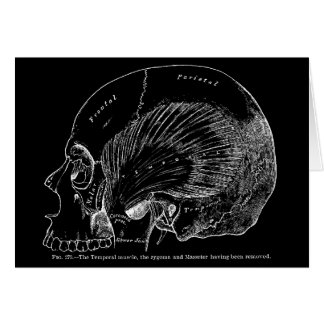 Vintage Medical Drawing Human Temporal Muscle Card