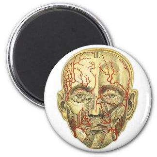 Vintage Medical Illustration of Head and Vascular 2 Inch Round Magnet