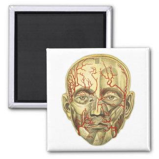 Vintage Medical Illustration of Head and Vascular 2 Inch Square Magnet