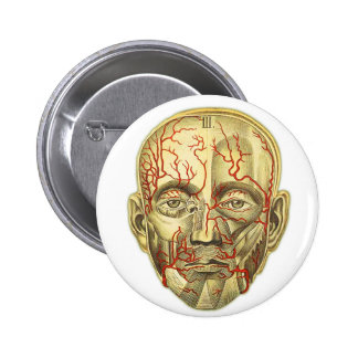 Vintage Medical Illustration of Head and Vascular Pinback Button