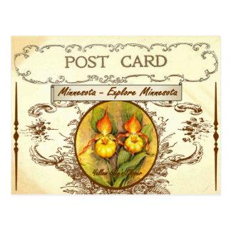 Vintage Minnesota State Flower Postcard