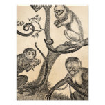 Vintage Monkey Illustration - 1800's Monkeys Art Photo