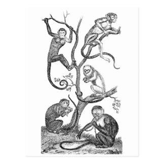 Vintage Monkey Illustration - 1800's Monkeys Postcard