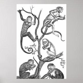 Vintage Monkey Illustration - 1800's Monkeys Print