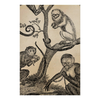 Vintage Monkey Illustration - 1800's Monkeys Posters