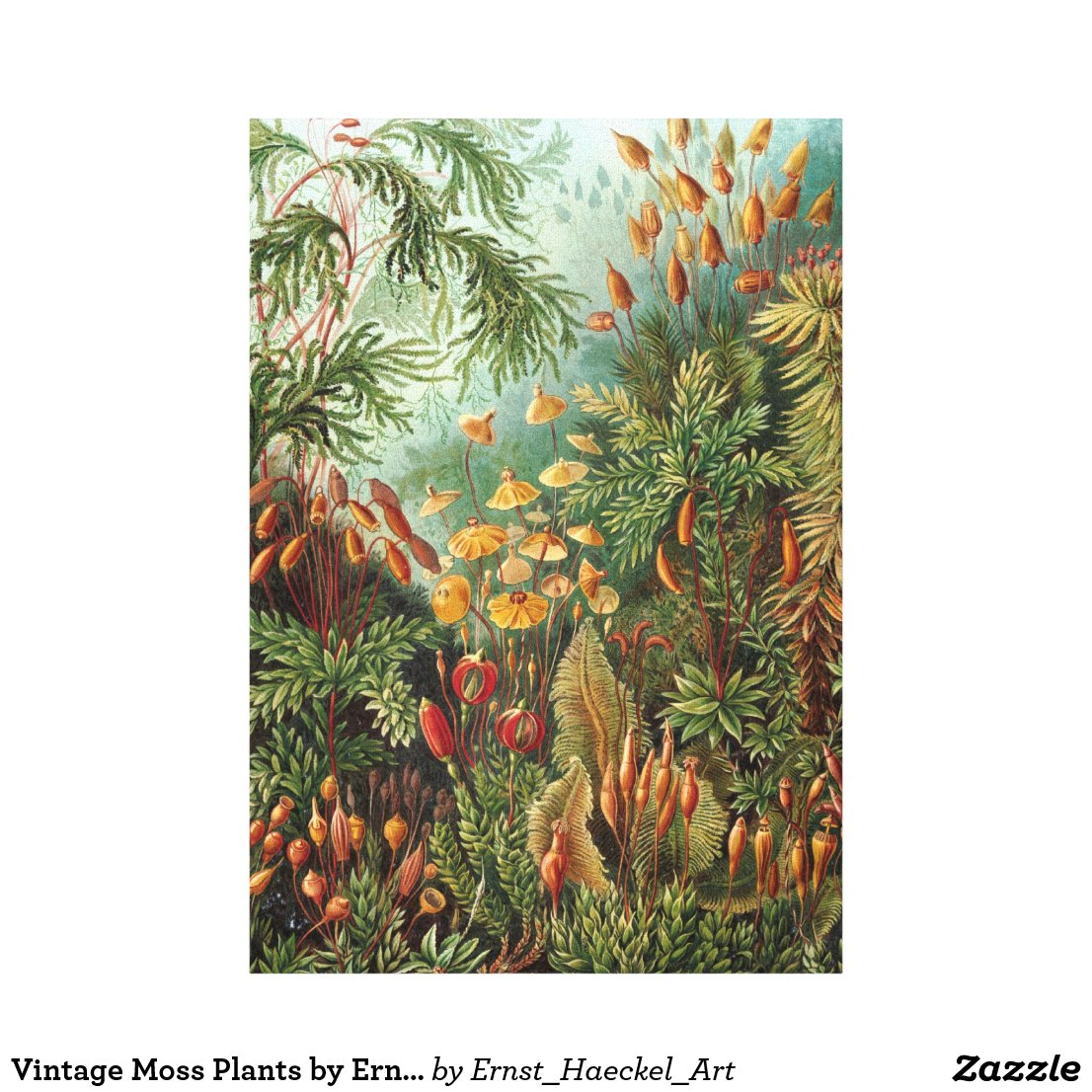 Vintage Moss Plants by Ernst Haeckel, Muscinae Canvas Print