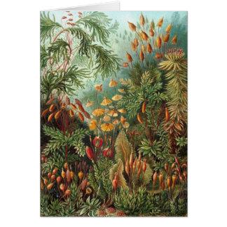 Vintage Moss Plants by Ernst Haeckel, Muscinae Card