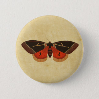 Vintage Moth Pinback Button