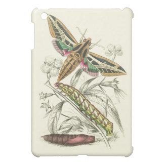 Vintage Moth Progression Case For The iPad Mini