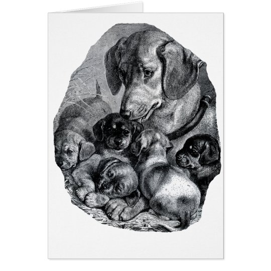 Vintage mother dog and her puppies drawing card