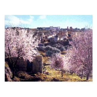 Vintage Mount Of Olives Jerusalem Israel 1950 - 77 Postcard