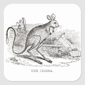 vintage mouse jerboa drawing square sticker