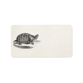 Vintage Mud Tortoise - Reptile Turtle Template Label