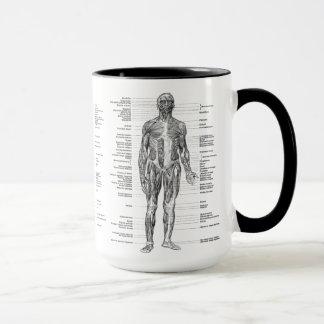 Vintage - músculos humanos etiquetados de la taza