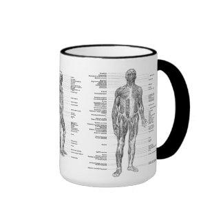 Vintage - músculos humanos etiquetados de la taza de dos colores